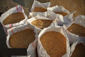 کشف بیش از ۱۰۰ تن گندم قاچاق در زنجان