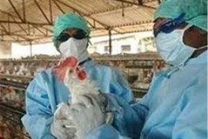 کانون جدیدی آنفولانزای پرندگان در گیلان مشاهده نشده است