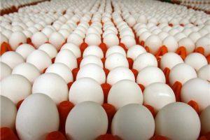 نگران بازار تخممرغ نباشید
