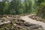 تخریب جنگل یعنی تخریب زندگی