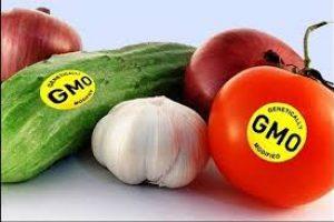 محصولات تراریخته به خوراک مردم گیلان وارد نشده است