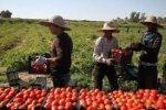 اشتغالزایی در بخش کشاورزی رشت افزایش یافت