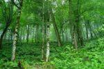 جنگلهای دامنههای اطراف قله درفک در مسیر ثبت سازمان یونسکو