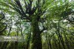 جنگلهای هیرکانی گیلان بعد از کویر لوت در راه یونسکو