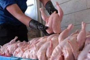 اقداماتی برای تعدیل قیمت مرغ در گیلان