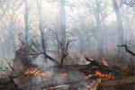 بخش وسیعی از اراضی جنگلی عباسآباد آستارا طعمه آتش شد