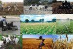 طرح «چند منبع درآمدیکردن روستاییان» در گیلان اجرا میشود