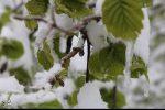سرمازدگی ۲۰۰۰ میلیارد ریال خسارت به کشاورزان گیلانی وارد کرد