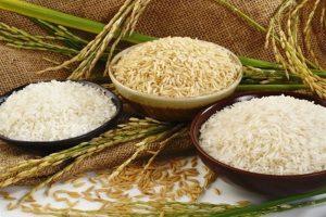 افزایش یک میلیون تنی تولید برنج/ نیاز به واردات نداریم