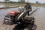 شخم زمستانه در ۳۵ هزار هکتار از مزارع گیلان