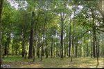 توسعه زراعت چوب و اجرای طرح کاداستر اولویت منابع طبیعی در گیلان