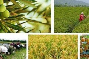 ضرورت نگاه جدی به نظام کشاورزی الکترونیک