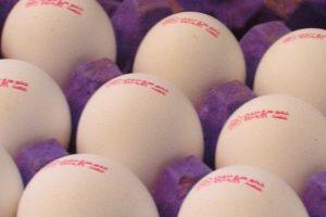 کاهش قیمت تخممرغ در روزهای باقیمانده سال