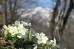 بهار گیلان ؛ فرش میزبانی برای میهمانان پهن می کند