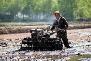 ۸۳ درصد مزارع گیلان شخم زمستانه زدند