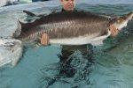 برای جلوگیری ازانقراض ماهیان خاویاری اهتمام داریم