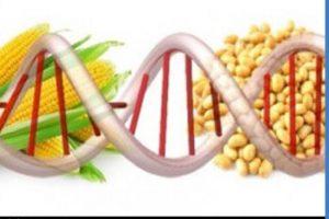 موضوع مهندسی ژنتیک باید در گفتمان دانشگاهی حل شود